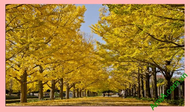 Tranh phong cảnh treo phòng khách cây lá vàng amia 337