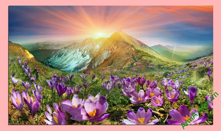 Tranh phong cảnh phòng khách đồi hoa nắng Amia 343
