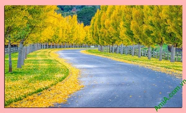 Tranh phong cảnh phòng khách lá vàng mùa thu amia 340