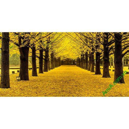 Tranh phòng khách phong cảnh thiên nhiên mùa thu lá vàng amia 338-00