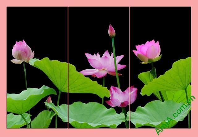 Tranh hoa Sen treo phòng khách ghép bộ 3 tấm Amia 365