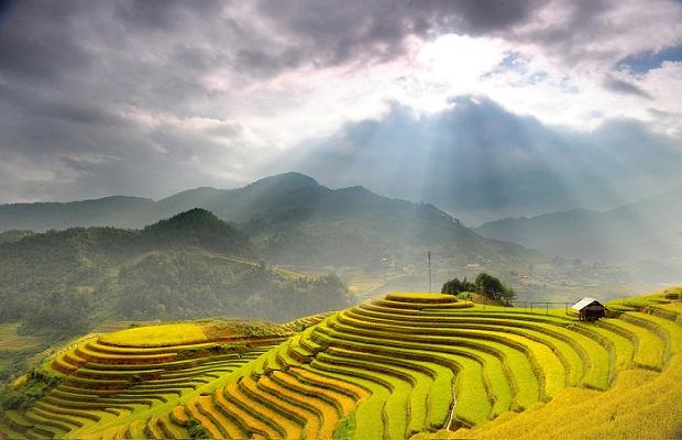 Khúc giao mùa với tranh phong cảnh quê hương tuyệt đẹp