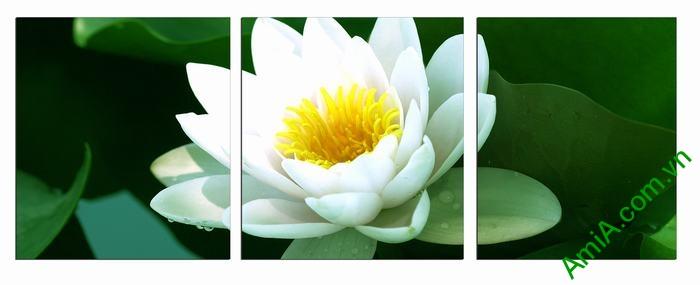 Tranh hoa Sen trắng trang trí phòng khách thư thái Amia 493