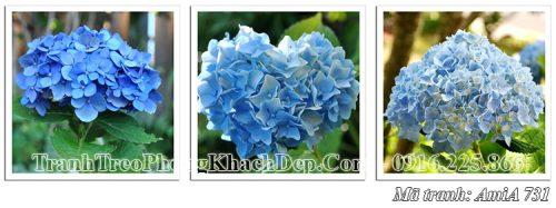 Tranh ghép 3 tấm Amia 731 hoa cẩm tú cầu