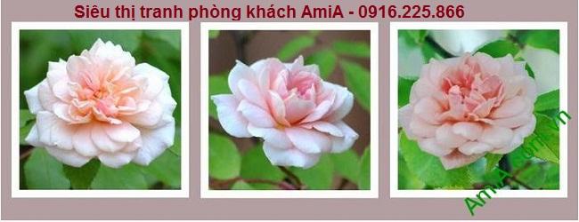 Mẫu thiết kế Tranh hoa hồng ghép bộ hiện đại đẹp
