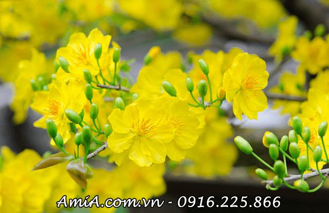 Hinh anh tranh hoa mai vang hien dai treo tet tai loc AmiA ist-512216204