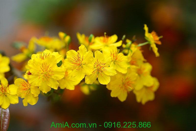 Hinh anh tranh tet hoa mai vang lam qua tang y nghia tai AmiA Ha Noi