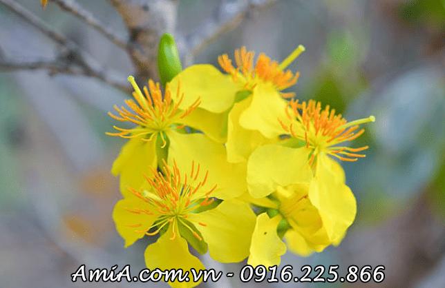 Hinh anh treo tranh hoa mai vang dip tet phat tai phat loc AmiA ist-504009394
