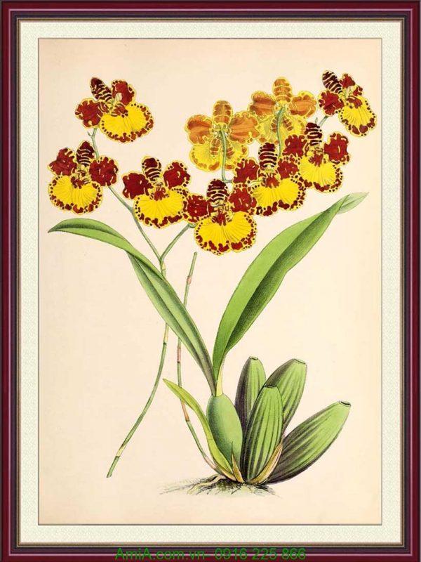 tranh trang tri hoa lan vang