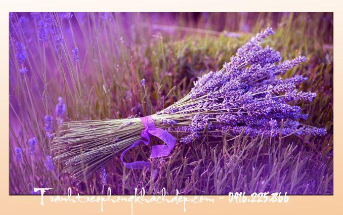 Nhan dat lam tranh hoa oai huong lavender theo yeu cau rieng