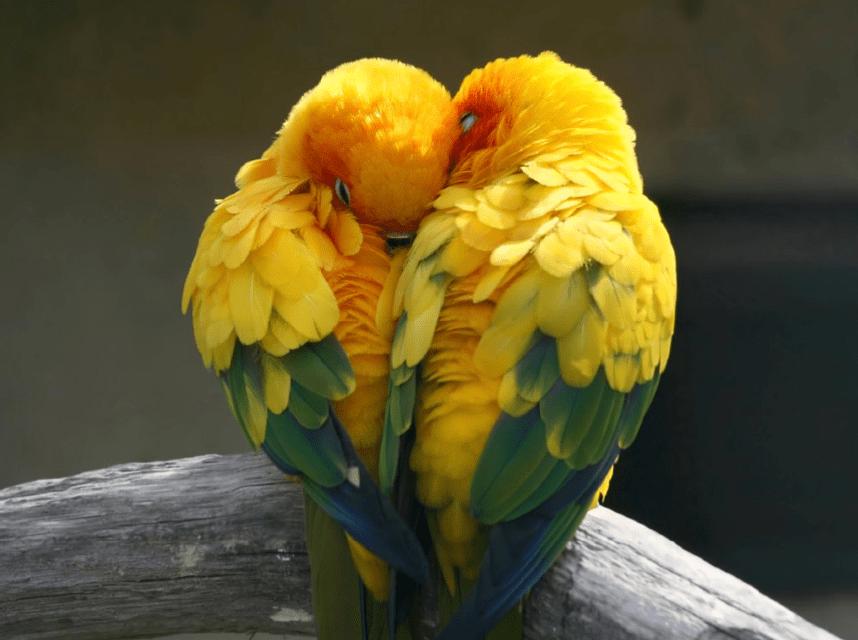 Hinh anh buc tranh doi chim treo phong cuoi vo chong y nghia hanh phuc