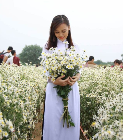 Hinh anh mua hoa cuc hoa mi goi dong ve