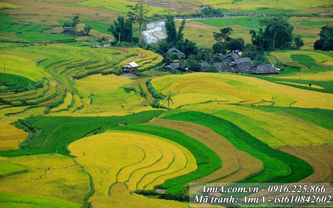 Tranh dep phong canh Tay Bac ruong bac thang Mu Cang Chai Yen Bai