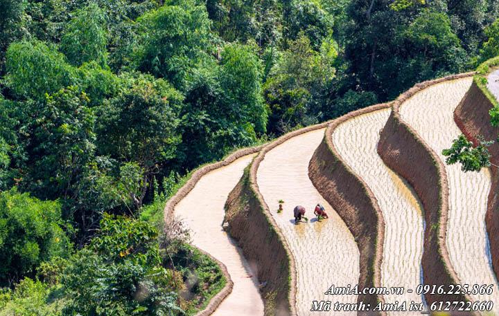 Hình ảnh ruộng bậc thang và người nông dân đang đi cấy