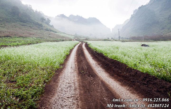 Hình anh phong cảnh thiên nhiên đẹp hoa cải trắng