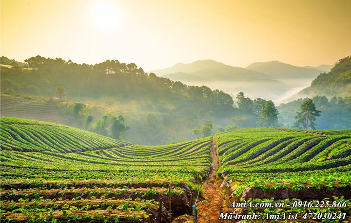 Hình ảnh phong cảnh đẹp đồi chè ở Sơn La Mộc Châu