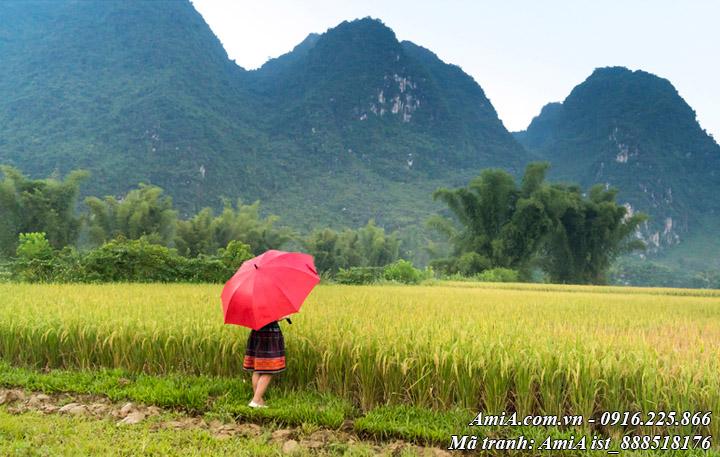 Hình ảnh phong cảnh đẹp núi rừng và con người