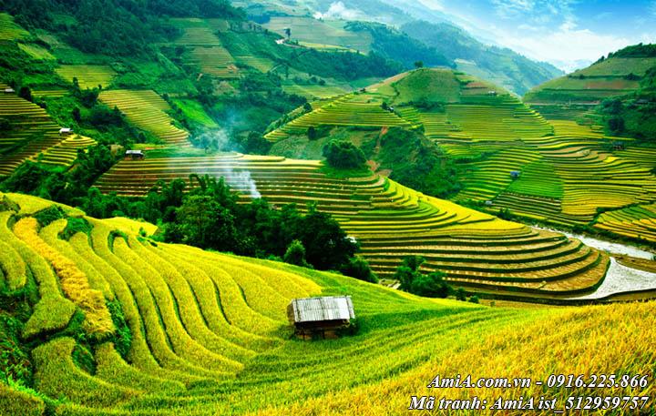 Hình ảnh ruộng lúa chín vàng phong cảnh đẹp thiên nhiên
