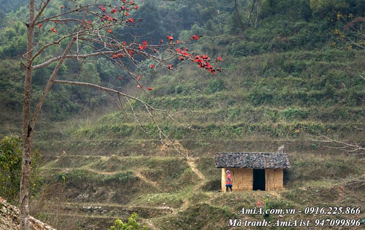 Hình ảnh buổi sớm tinh mơ trên vùng núi cao giữa tháng 3 hoa gạo