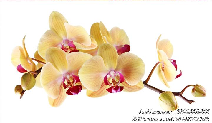 Địa chỉ làm tranh hoa phong lan theo yêu cầu tại Hà Nội