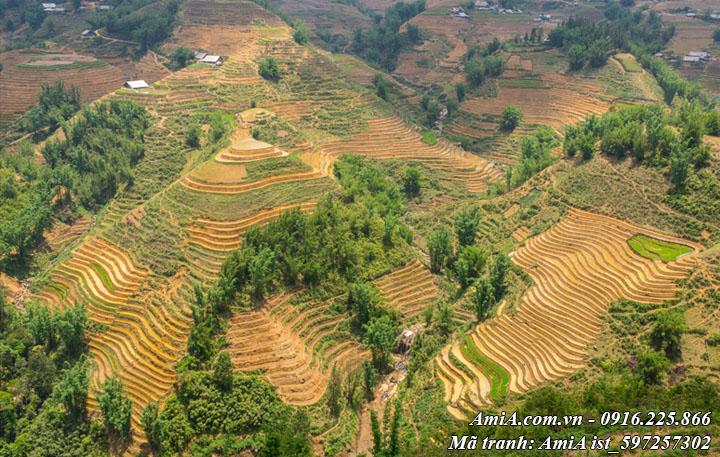 Hình ảnh núi rừng tây bắc khi mới thu hoạch xong