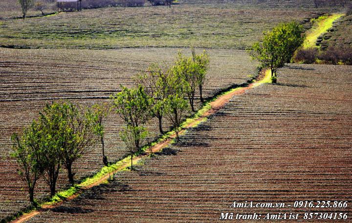 Hình ảnh phong cảnh cánh đồng quê em mênh mông bát ngát