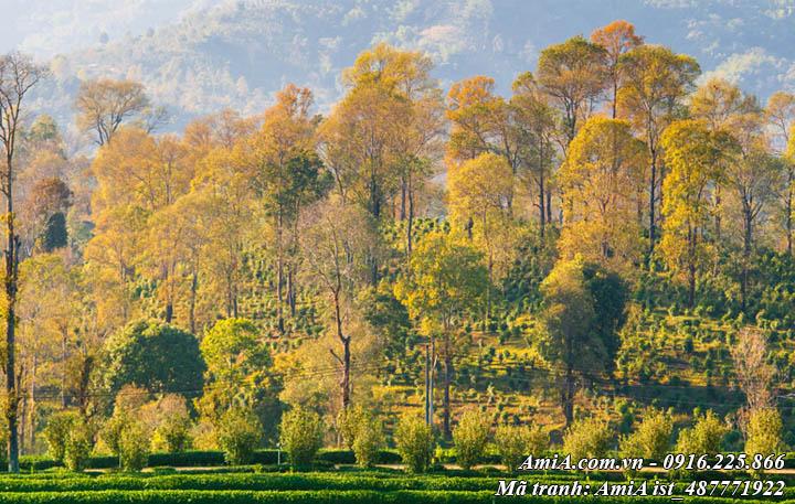 Hình ảnh tranh cây cối trong rừng Tây Bắc