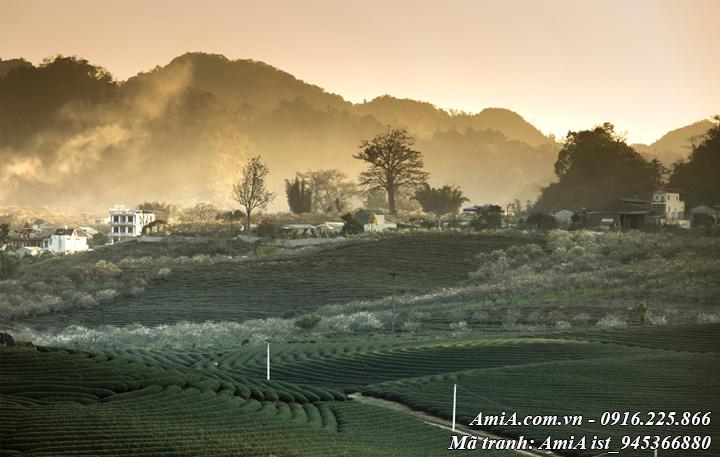 Hình ảnh đồi chè trong xanh phong cảnh núi rừng tây bắc