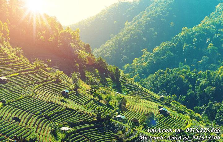 Hình ảnh phong cảnh đẹp đồi núi ruộng bậc thang giữa núi rừng tây bắc