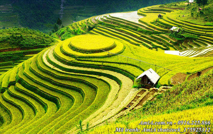 Hình ảnh phong cảnh đẹp ruộng bậc thang dưới ánh nắng vàng