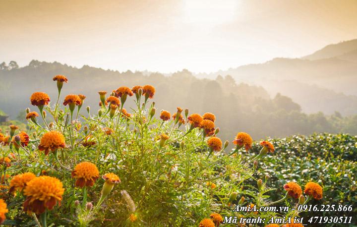 Hình ảnh tranh phong cảnh đẹp rừng núi Tây Bắc đồi hoa