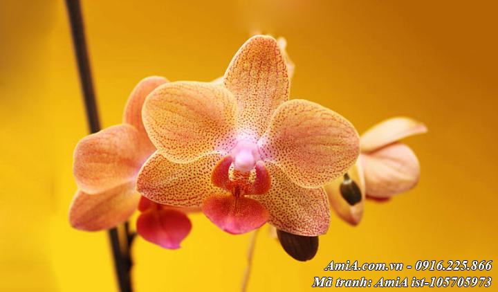 Hình ảnh hoa lan màu cánh gián trang trí nội thất sang trọng