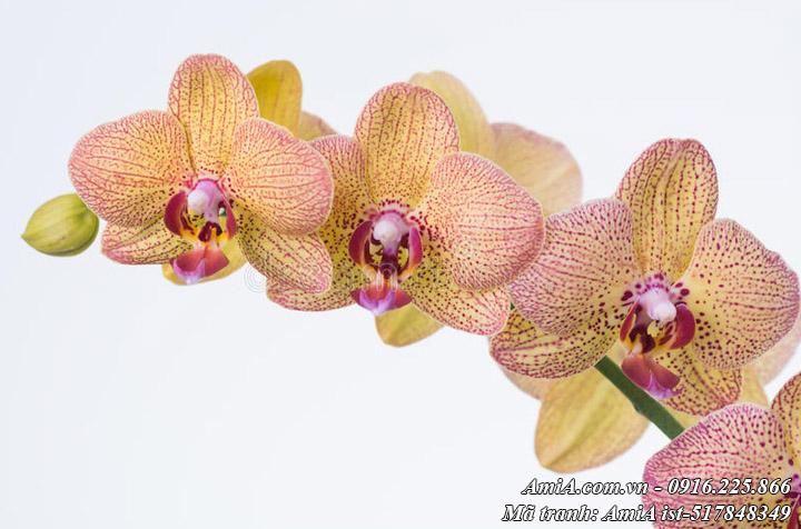Hình ảnh tranh hoa lan đẹp phần 3 với gam màu cánh gián