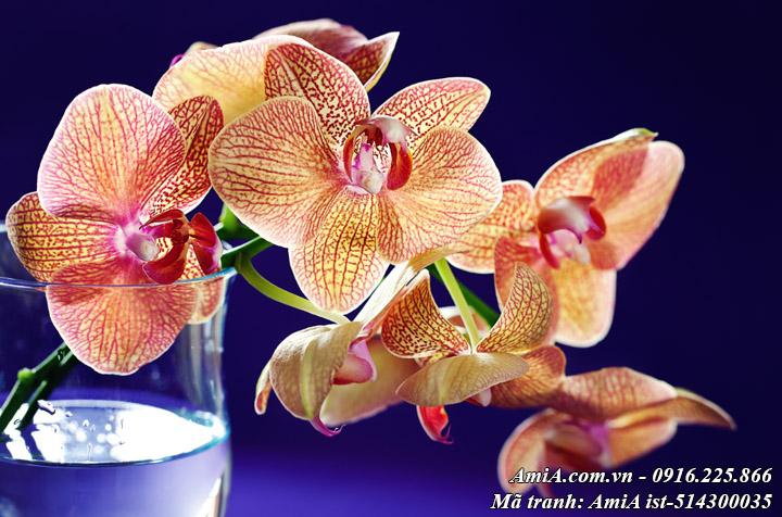 Hình ảnh tranh hoa lan trong cốc nước mang tới sự thư thái