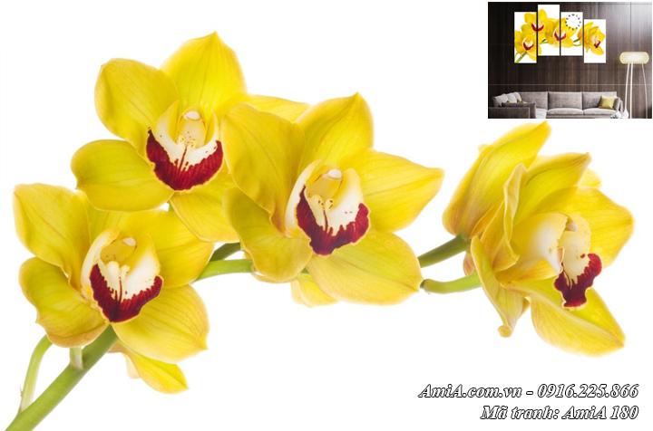 Tranh AmiA 377 hình ảnh hoa lan vàng nở sang trọng phú quý