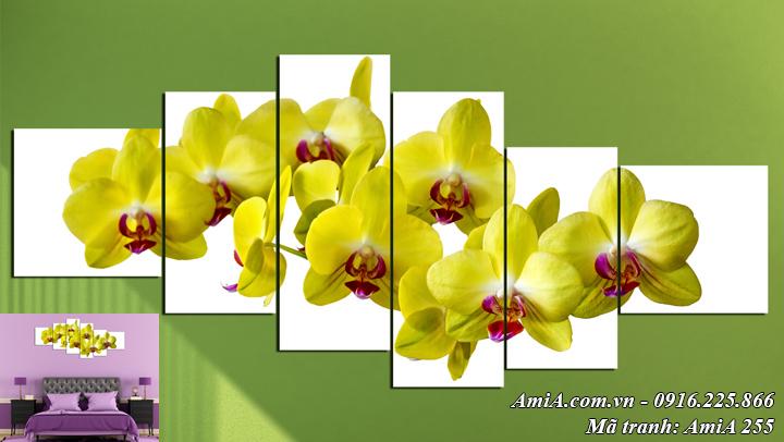 Hình ảnh hoa lan vàng khổ lớn tranh AmiA 255 bộ 6 tấm