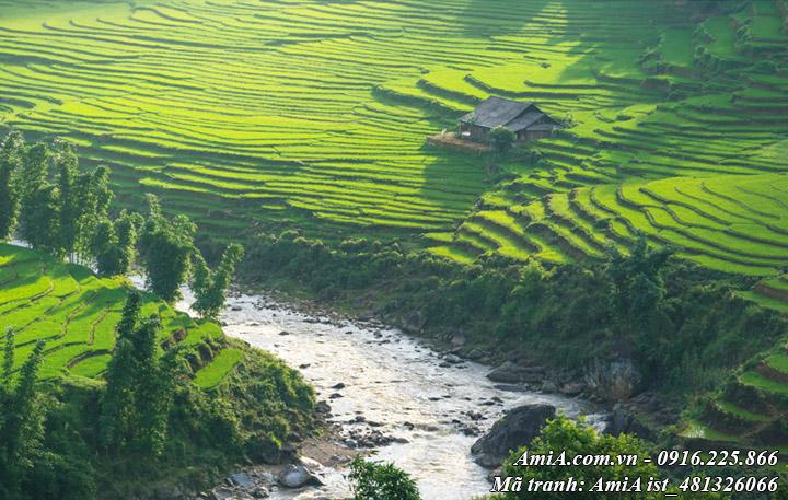 Hình ảnh phong cảnh đẹp với những con suối bên thửa ruộng bậc thang