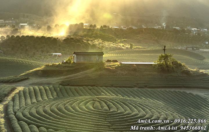 Hình ảnh phong cảnh đồi chè trái tim ở mộc châu sơn la