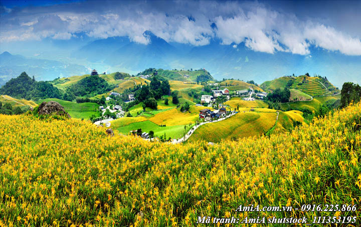 Hình ảnh tranh thiên nhiên đẹp đồi hoa cải vàng