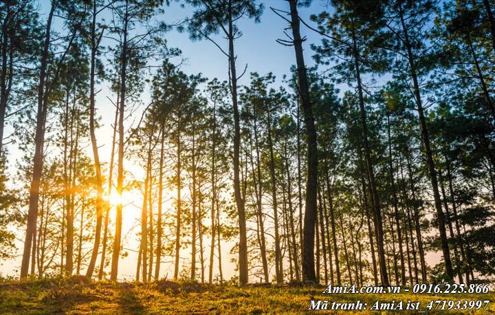 Hình ảnh phong cảnh đẹp rừng cây tây bắc dưới ánh mặt trời