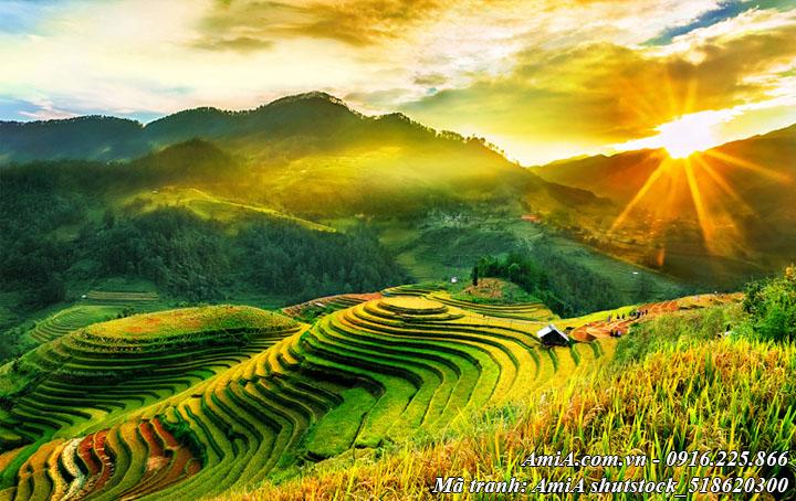Hình ảnh núi đồi ruộng bậc thang dưới ánh nắng vàng