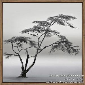 Hình ảnh tranh cây đời sương gió treo phòng khách đẹp