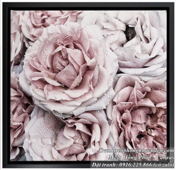 Tranh hoa hồng pháp còn đọng sương mai rất đẹp
