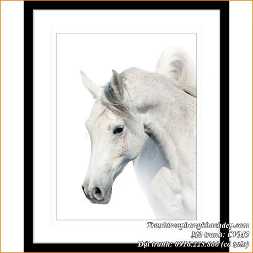 Hình ảnh tranh AmiA CVM5 tranh canvas bạch mã treo phòng khách