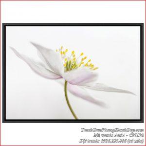 Tranh nghệ thuật hoa trắng tinh khôi làm canvas Amia CVM28