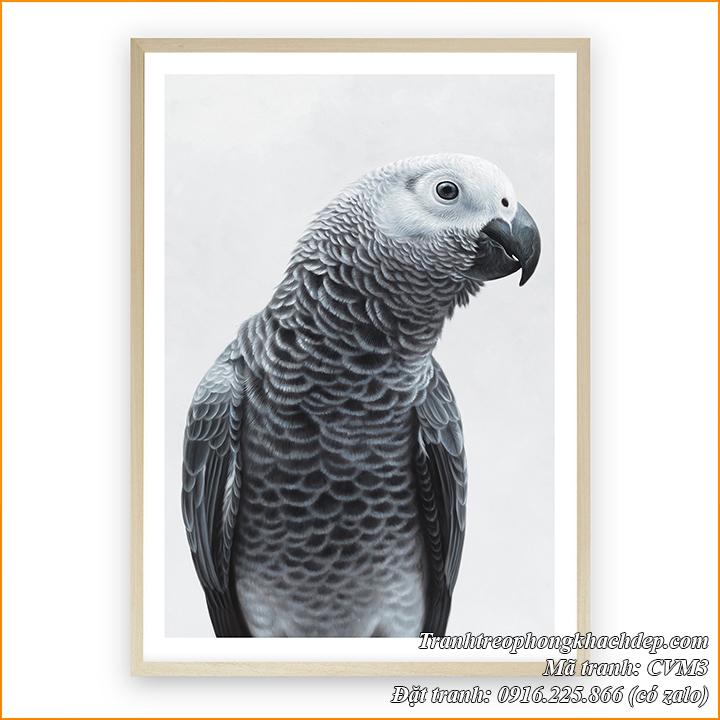 Tranh canvas bức chim vẹt đen trắng AmiA CVM3 treo phòng khách