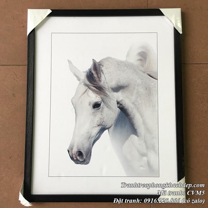 Hình ảnh tranh Ngựa trắng canvas thực tế khung đen tại cửa hàng tranh Amia