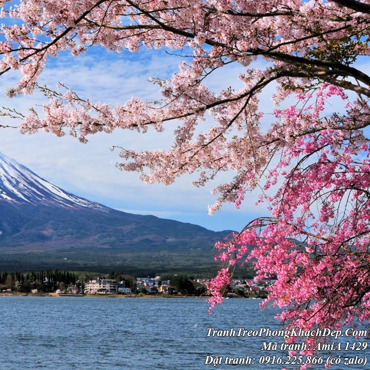 Tranh hoa anh đào trên hồ FujiKawaguchi