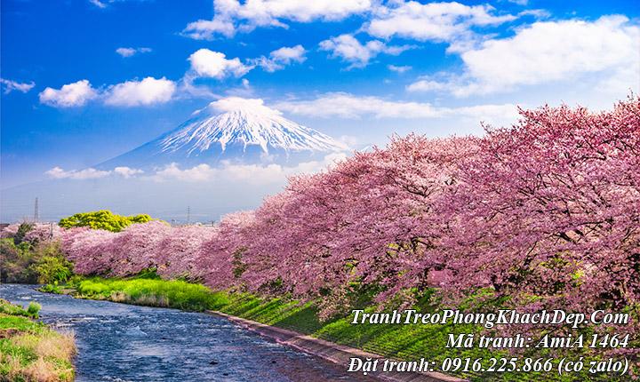 Tranh phong cảnh núi phú sỹ hoa anh đào đẹp nổi tiếng amia 1464