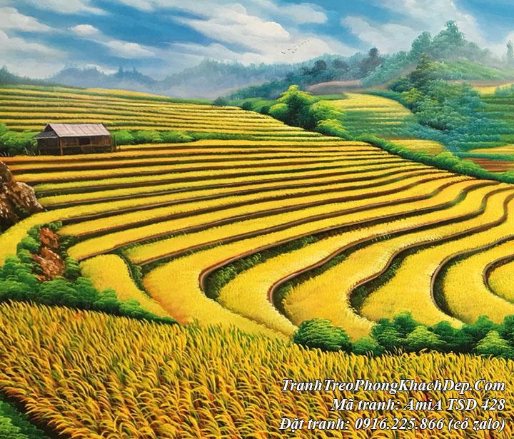 Hình ảnh tranh vẽ ruộng bậc thang lúa chín vàng AmiA TSD 428